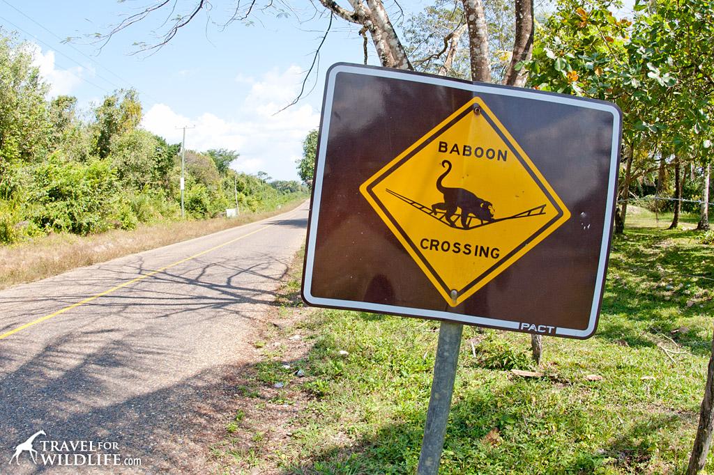 Howler Monkey (baboon) crossing sign in Belize