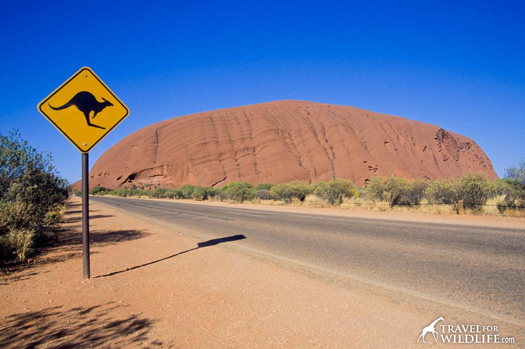 Kangaroo crossing sign near Uluru (Ayer's Rock) in Australia