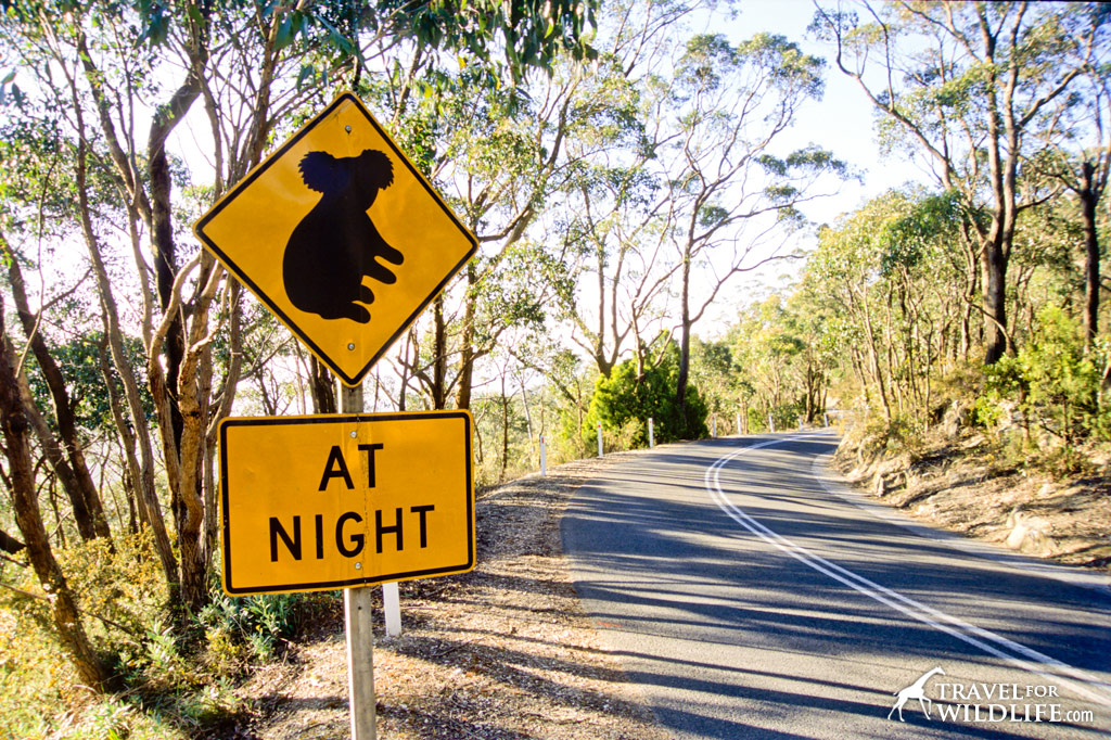 Koala crossing sign, Australia