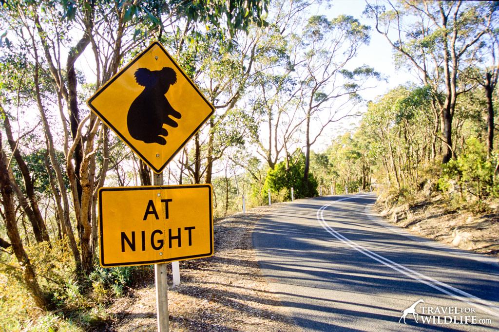 Koala crossing sign, Australia