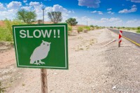 The new version of the owl crossing sign in the Kalahari, South Africa
