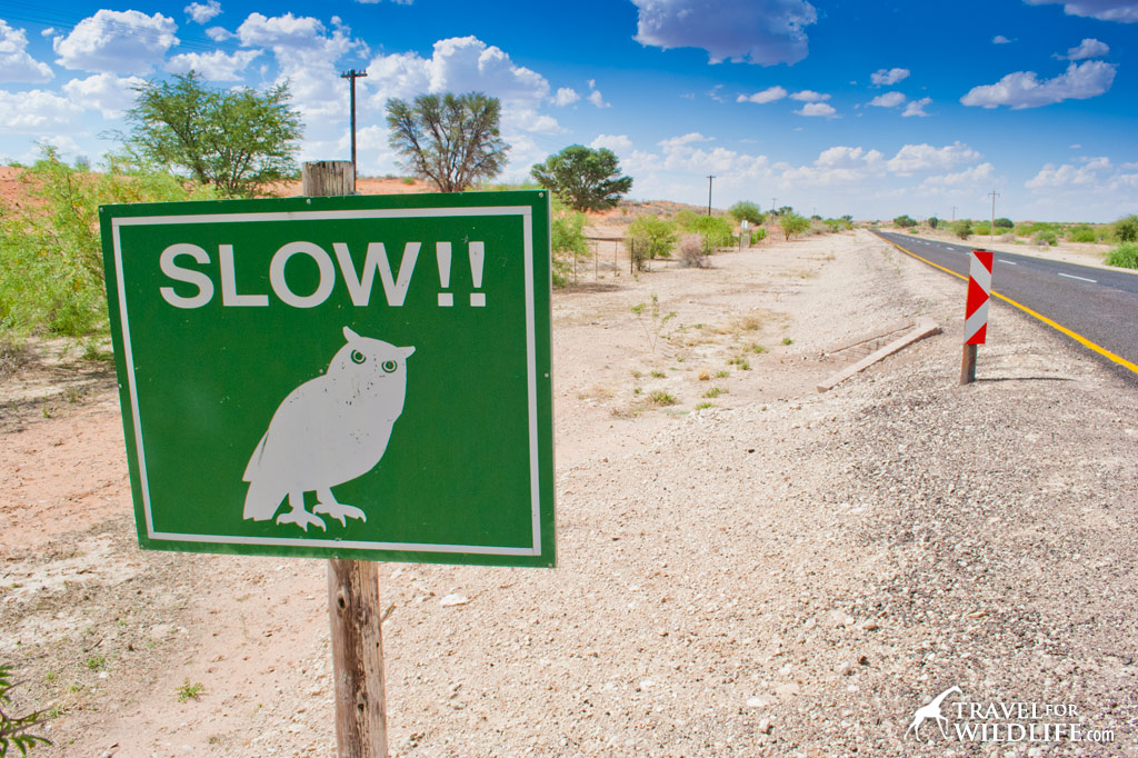 owl crossing sign Kalahari, South Africa