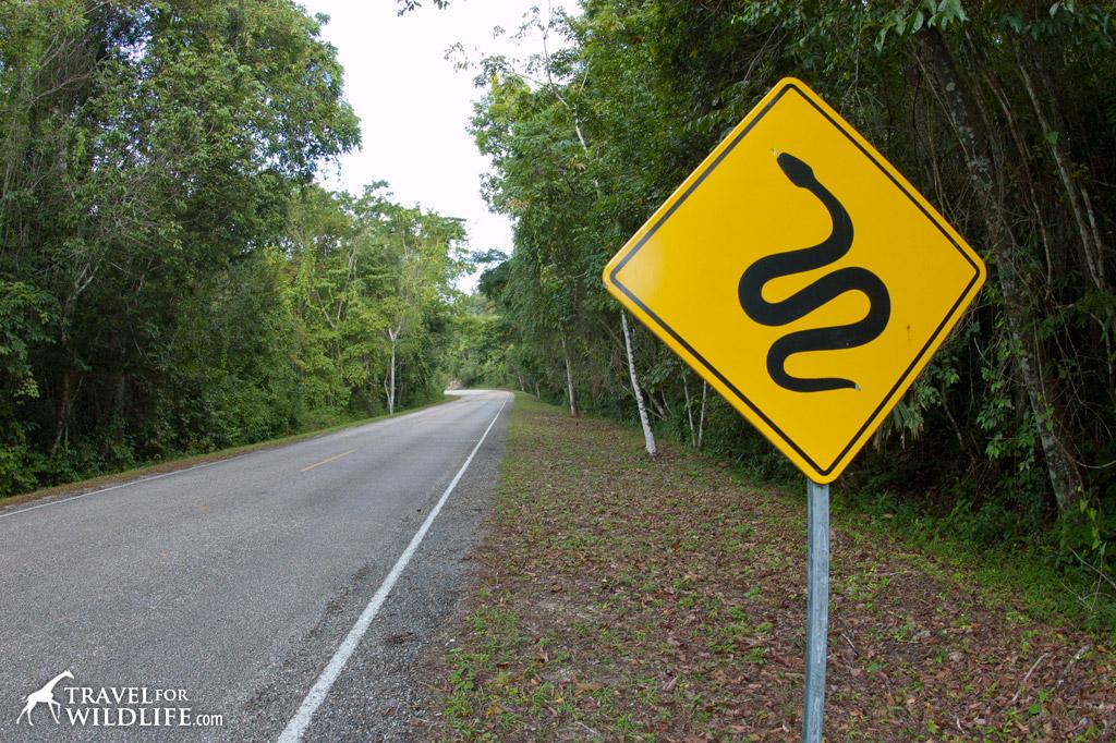Snake crossing sign, near Tikal, Guatemala