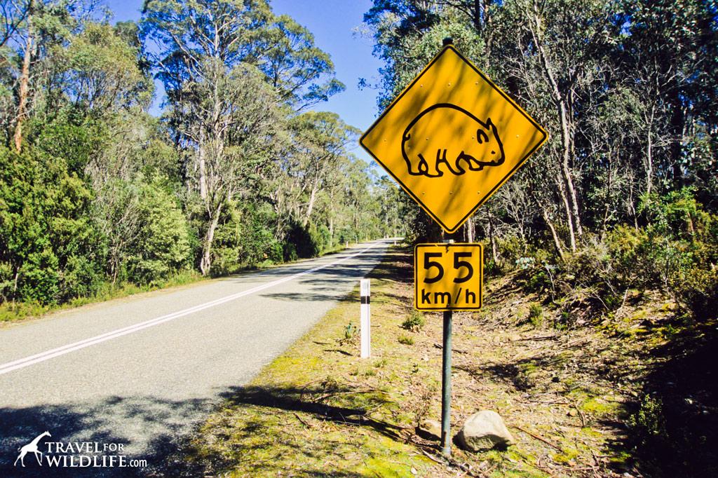 Wombat crossing sign, Australia
