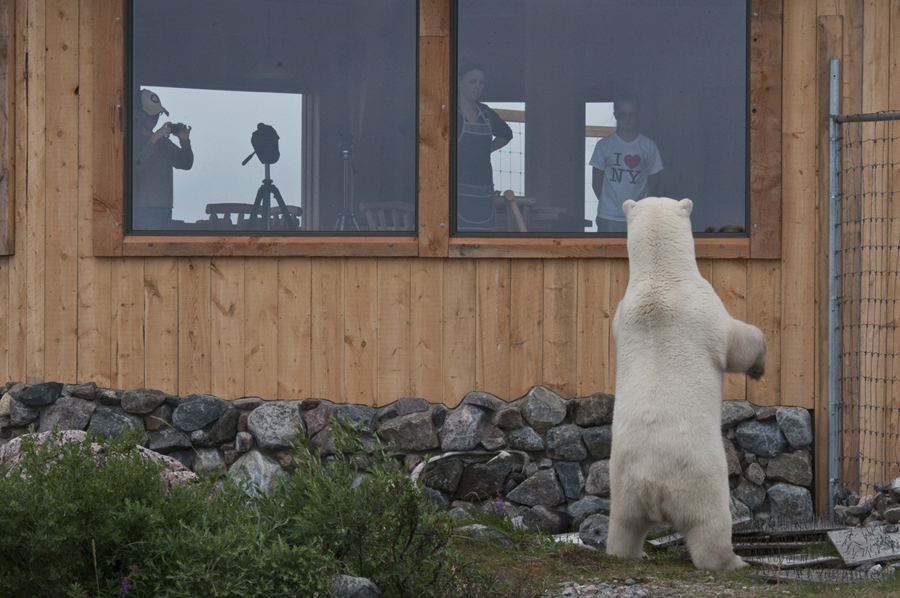 Polar bear encounter