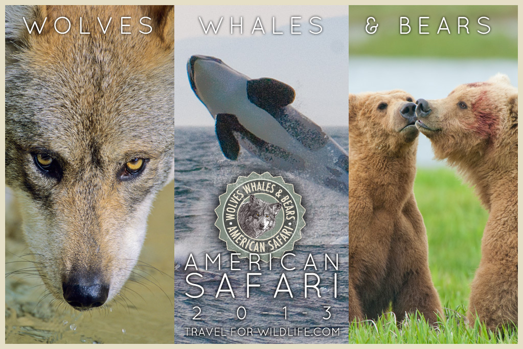 Wolves, Whales and Bears