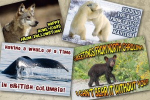 Get your own wildlife postcard from the road. (Actual postcards will vary.)