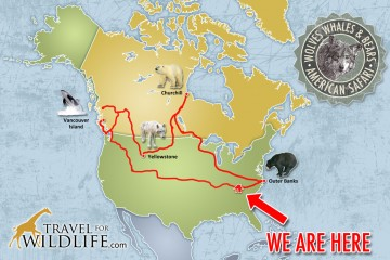 American safari route map, American wildlife