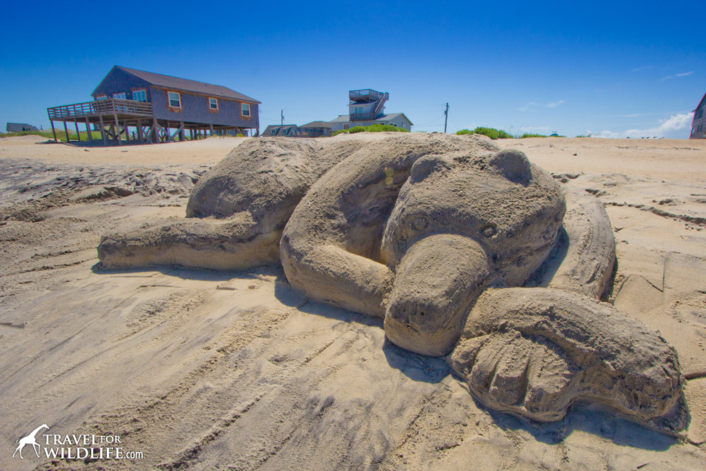 black bear sand sculpture