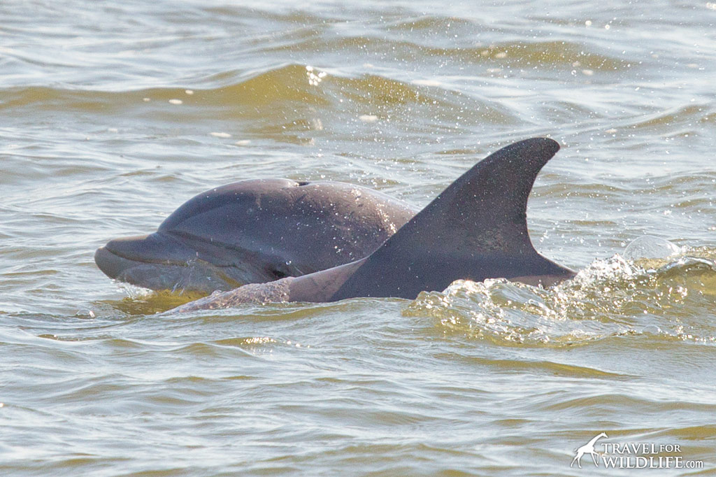 Nags Head Dolphin Tour