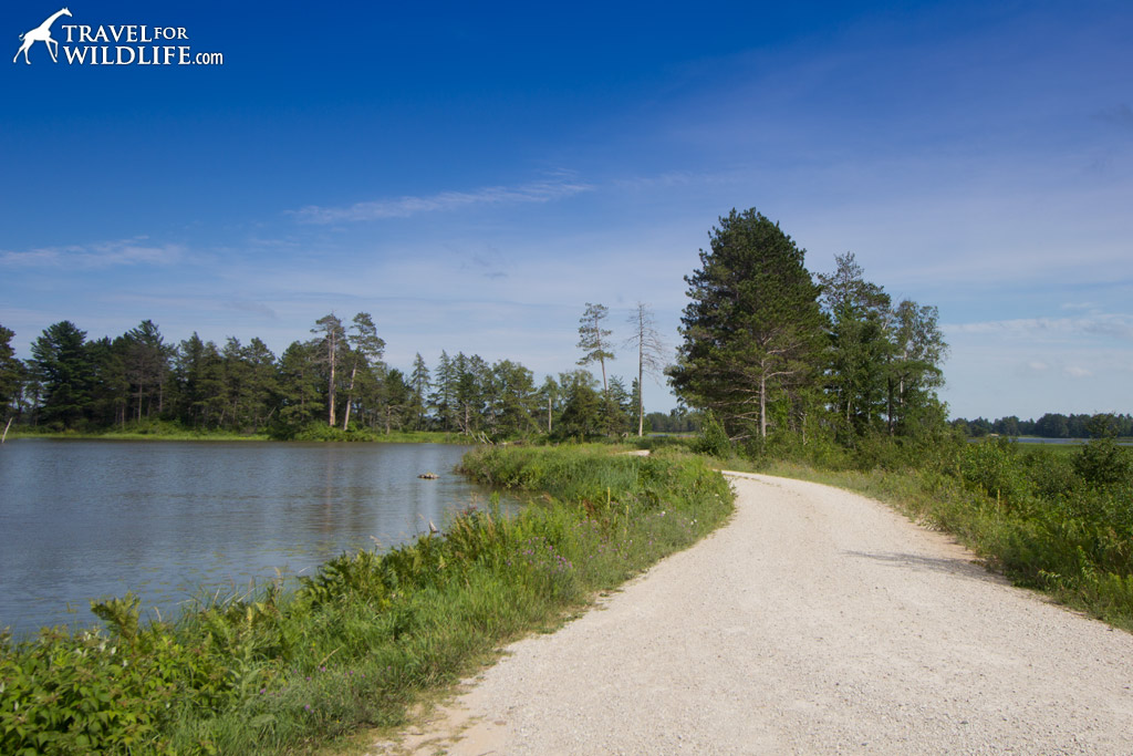Marsh drive at Seney NWR