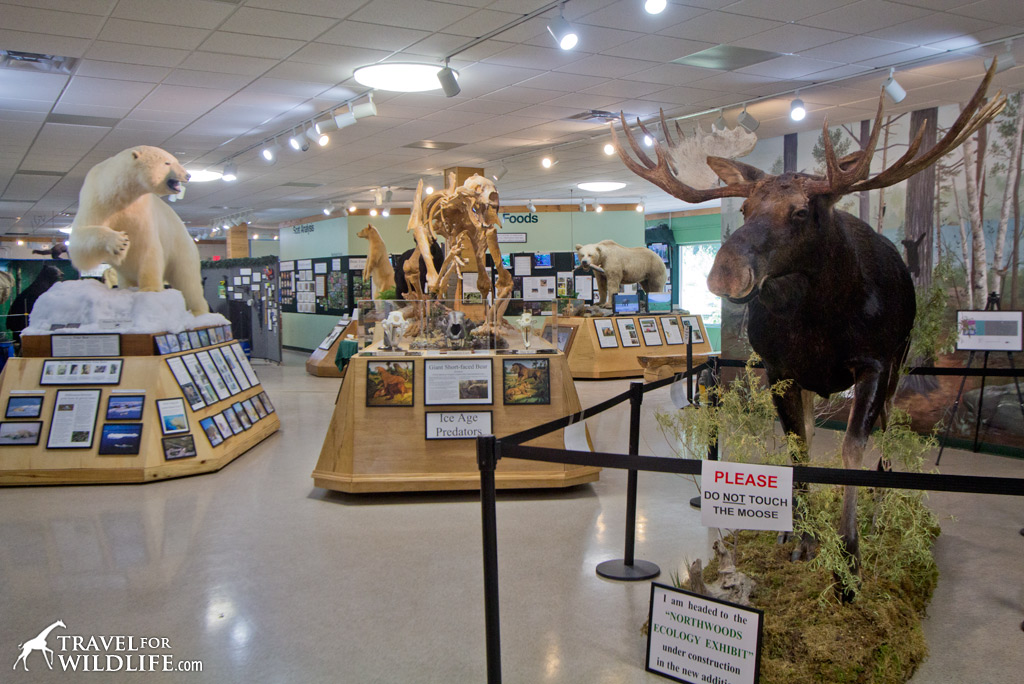 Exhibits inside the North American Bear Center in Ely, Minnesota