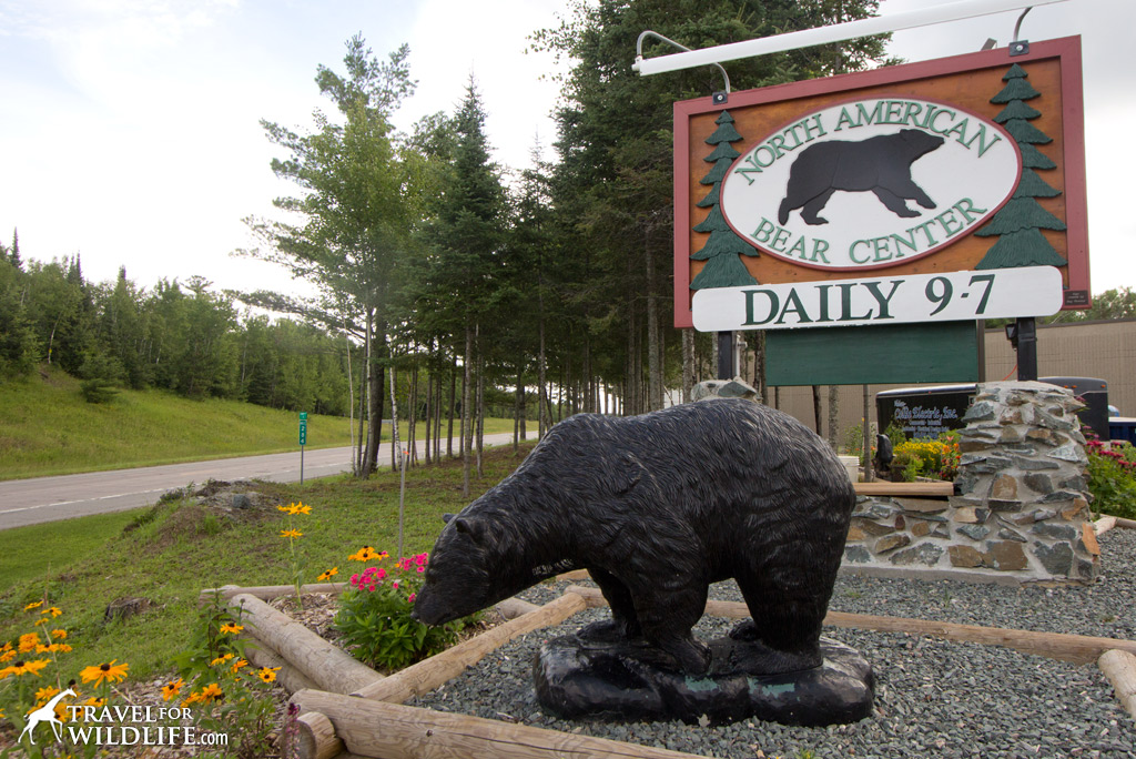 The North American Bear Center in Ely, MN