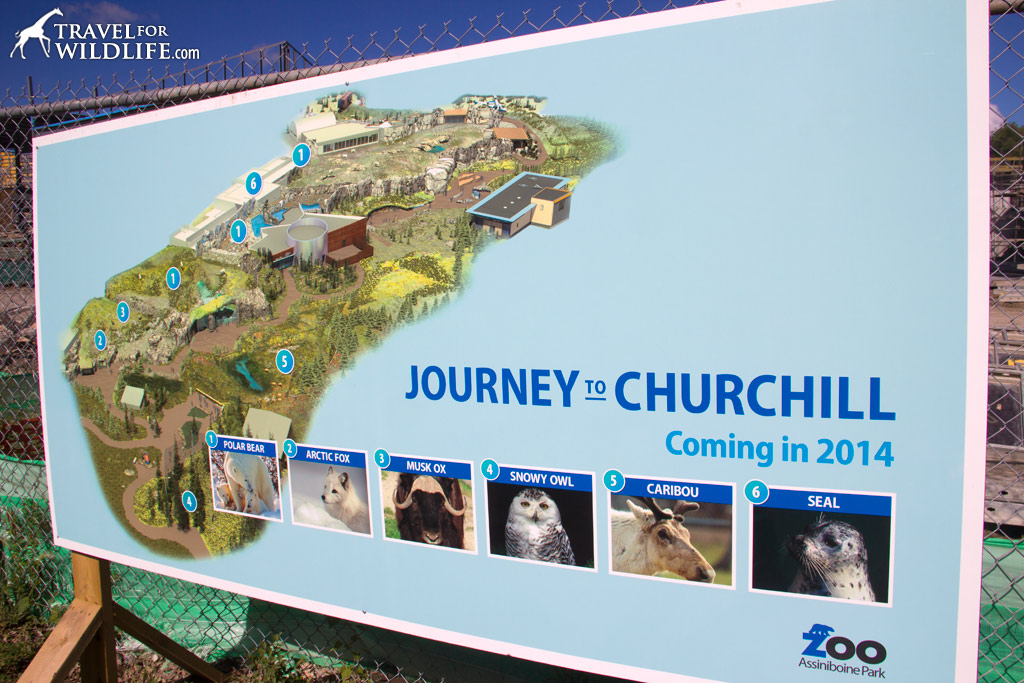 The plan for the impressive new Journey to Churchill exhibit at Assiniboine Park Zoo