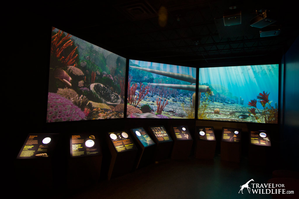 A cool exhibit at the Manitoba Museum, like looking into an aquarium of the ancient seas.