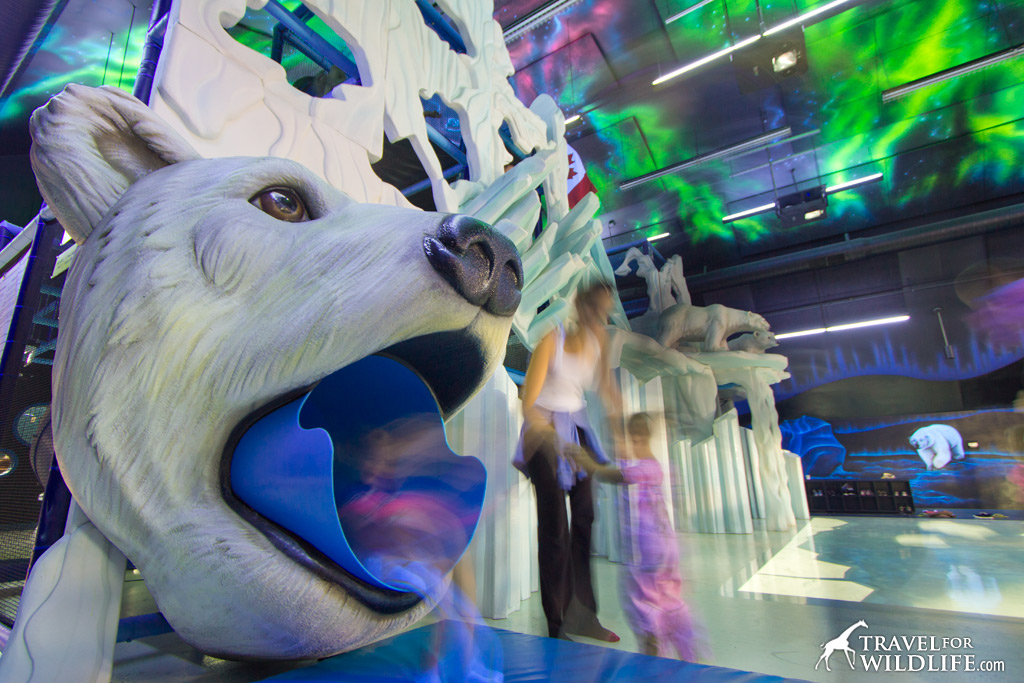 The Polar Playground at the Journey to Churchill exhibit is a blast!