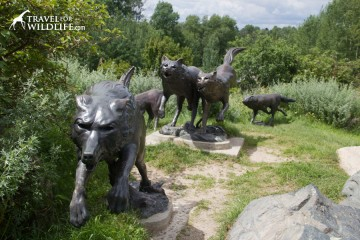 wolf statues