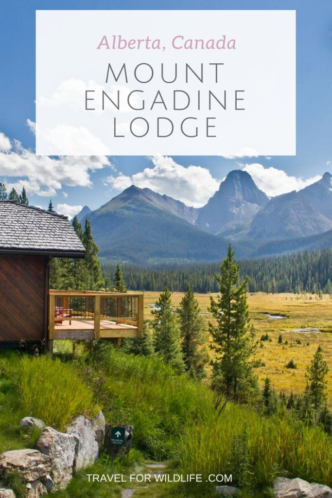 When visiting the Spray Valley Provincial Park in Alberta, Canada, stay at Mount Engadine Lodge and treat yourself at this gorgeous mountain retreat.