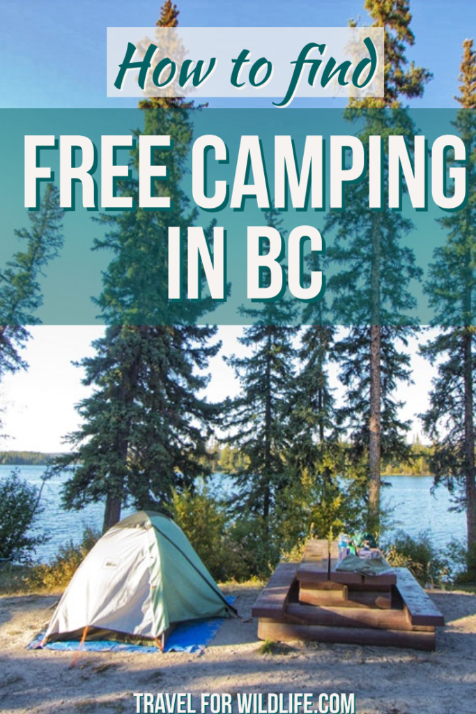 Are you looking for free camping in BC, Canada? With over a thousand recreation sites, you can camp in many of them. Here is how to find free campsites.