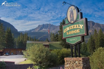 You want find a much better view in the valley than from the Grizzly Bear Lodge in Silver Gate