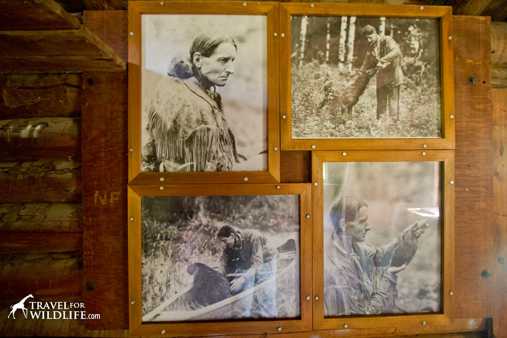 Grey Owl photos at his cabin