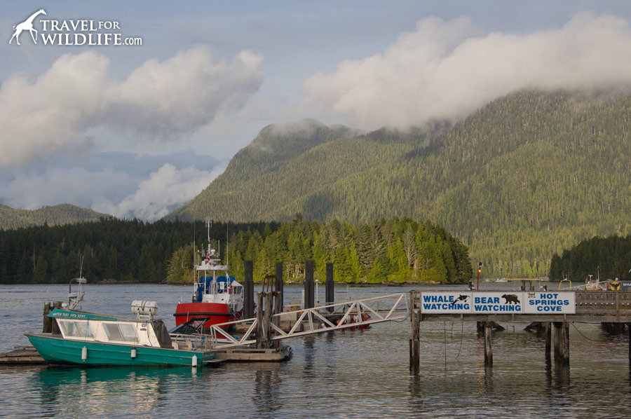 Fishing boats in Tofino harbor