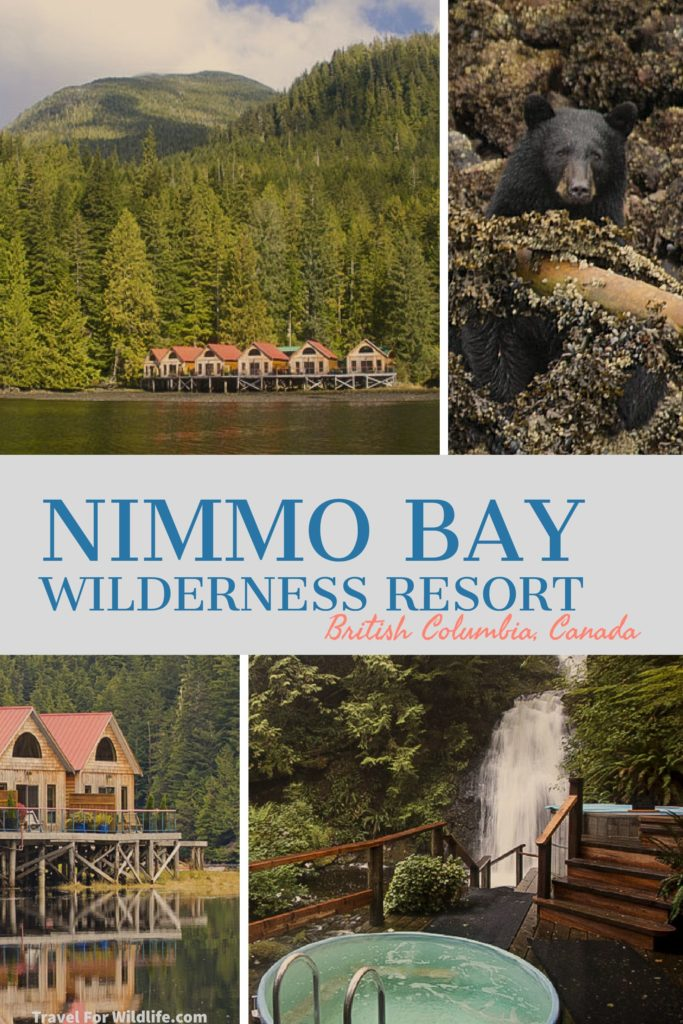 Experience the Great Bear Rainforest while staying at Nimmo Bay, a luxury resort. Go whale watching, bear watching, snorkeling in the Great Bear Sea, kayaking, heli hiking! Explore the canadian wilderness at Nimmo Bay. #Wilderness #Lodge #BritishColumbia #Canada