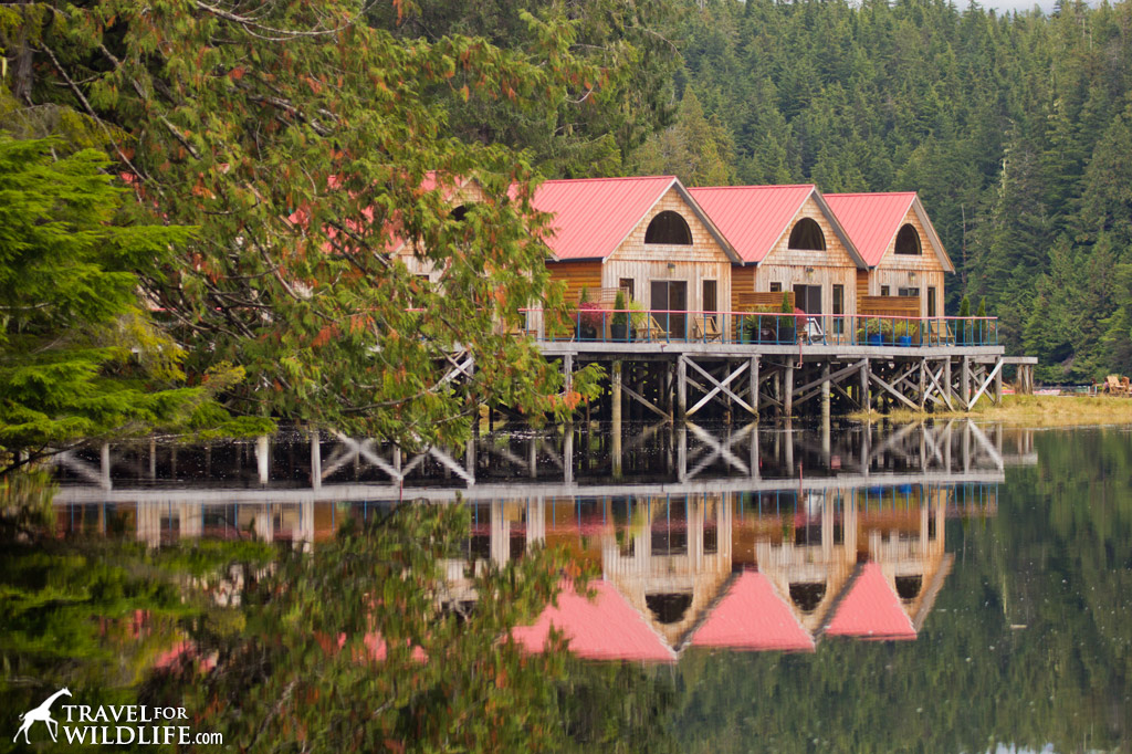 The cabins at Nimmo Bay Wilderness Resort
