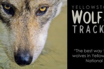 tourslider-wolf-tracker
