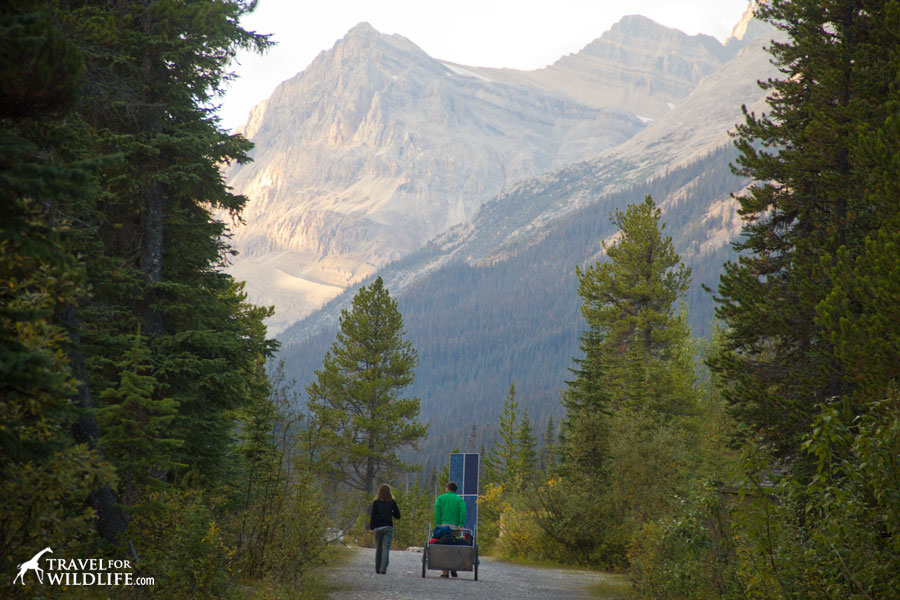Cart camping