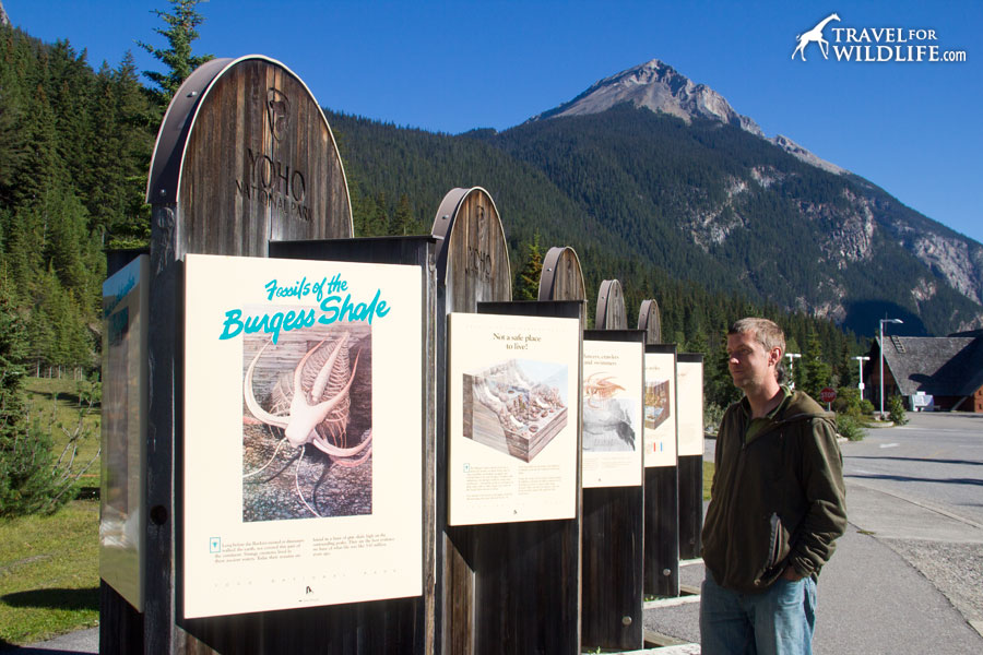 Burgess Shale information panels