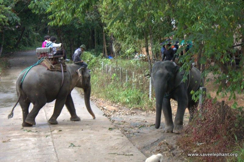 Tourists riding an asian elephant