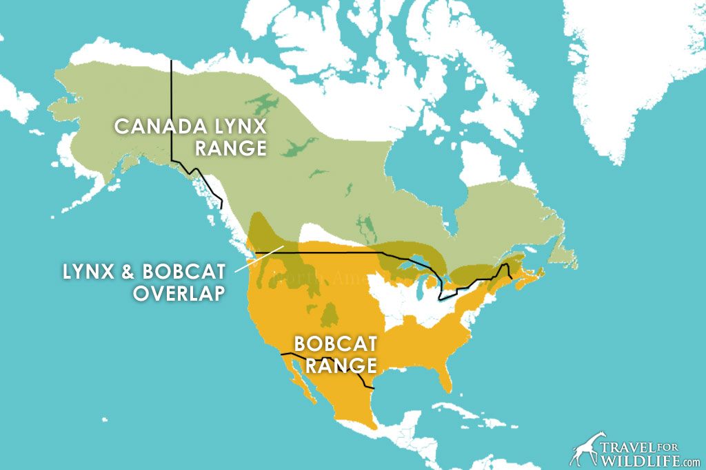 Canadian Lynx and Bobcat range map
