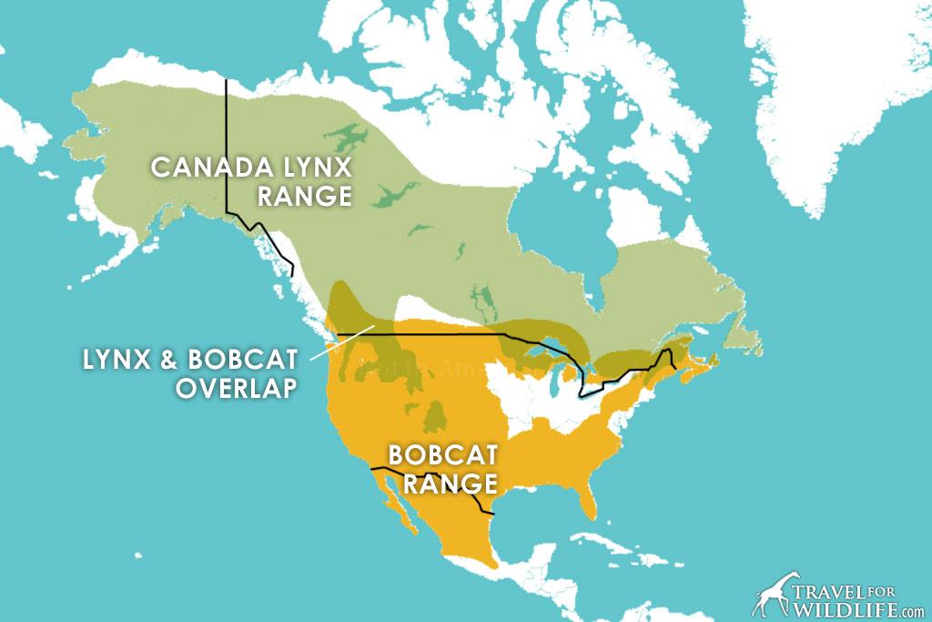 Canadian Lynx and Bobcat range map