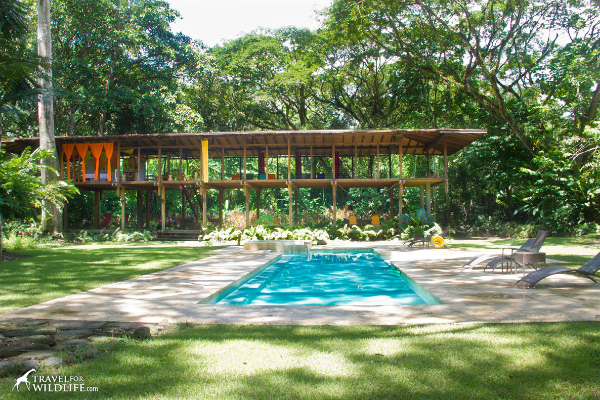 Our favorite costa rica ecolodges in the osa peninsula for Pool design costa rica
