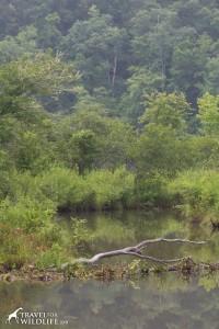 beaver dam near Asheville, NC