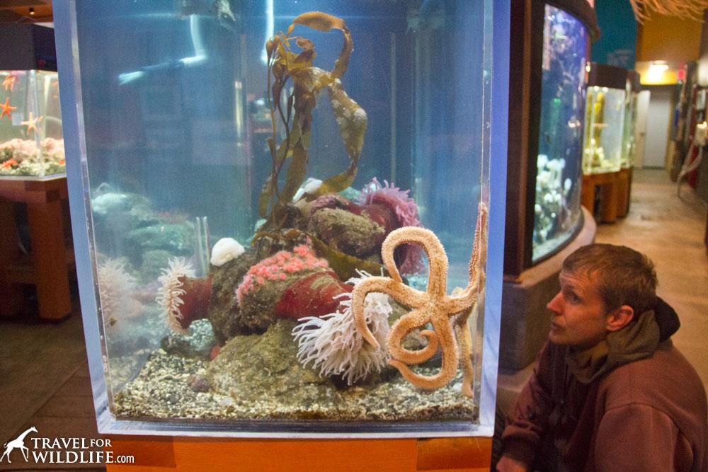 Ucluelet Aquarium, Vancouver Island