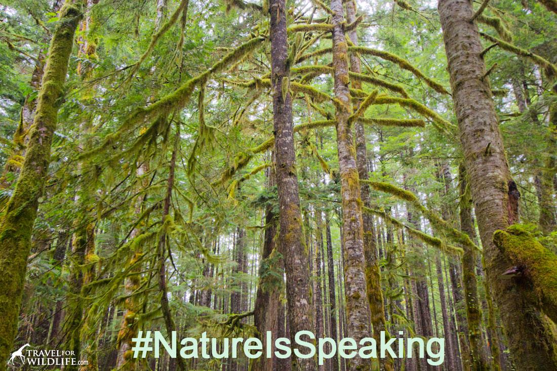 Great Bear Rainforest