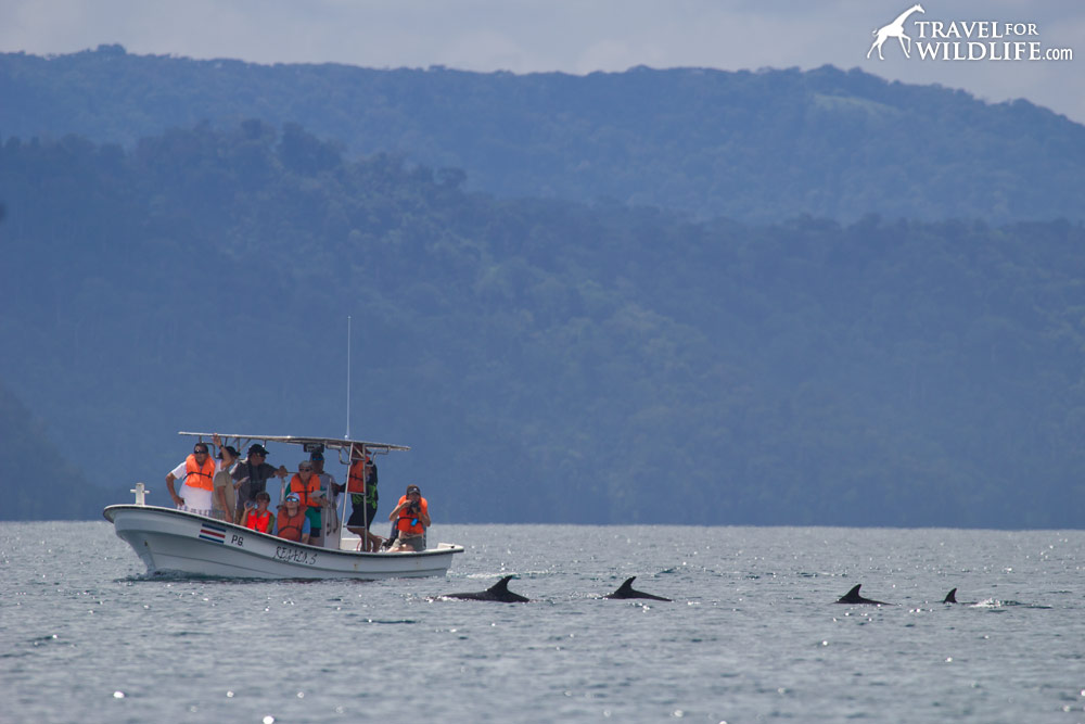 Watching dolphins in Golfo Dulce, Costa Rica