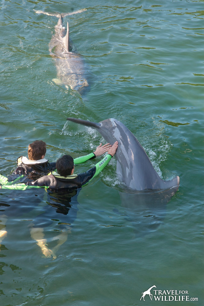 Kids Petting a captive dolphin