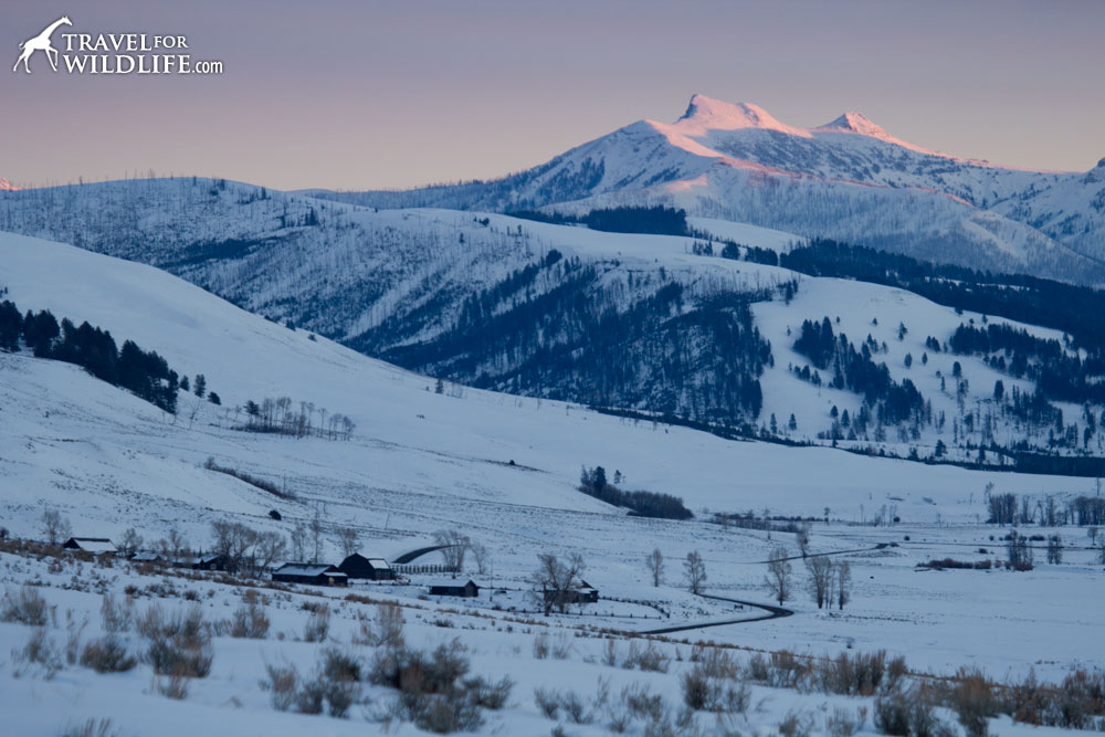 The Lamar Buffalo Ranch, your base for a Yellowstone winter tour