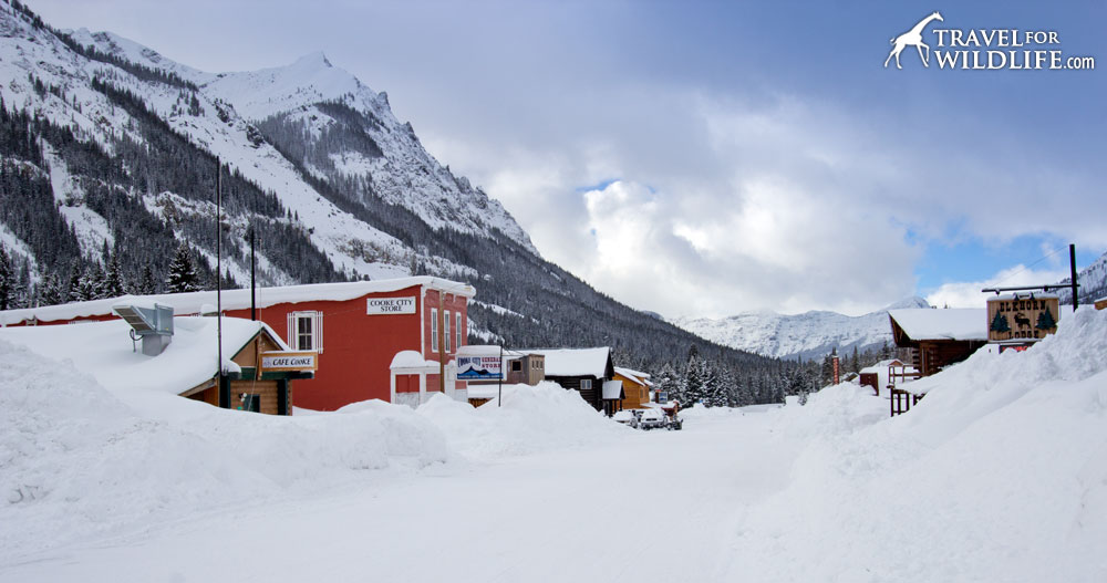 Cooke City in late January