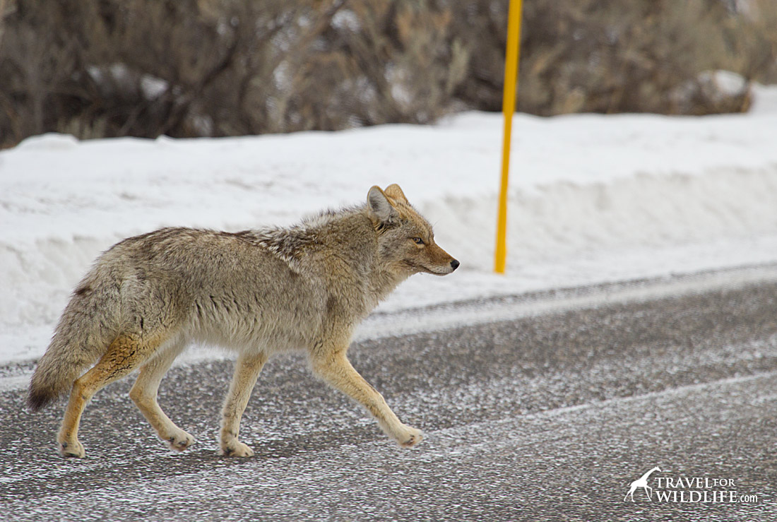 Watch out for wildlife crossing the road