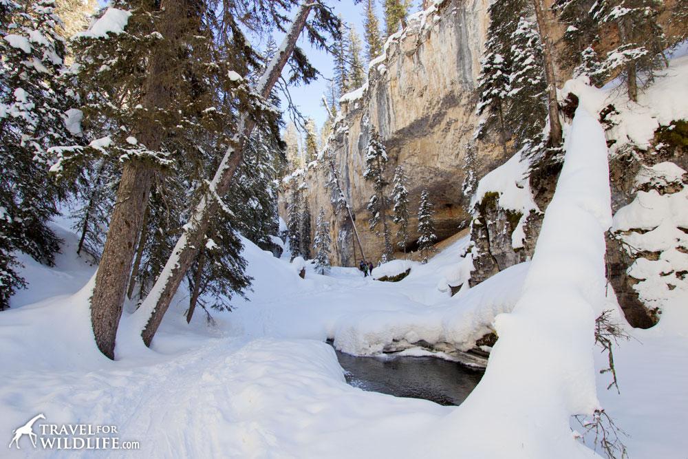 Pebble Creek in the winter
