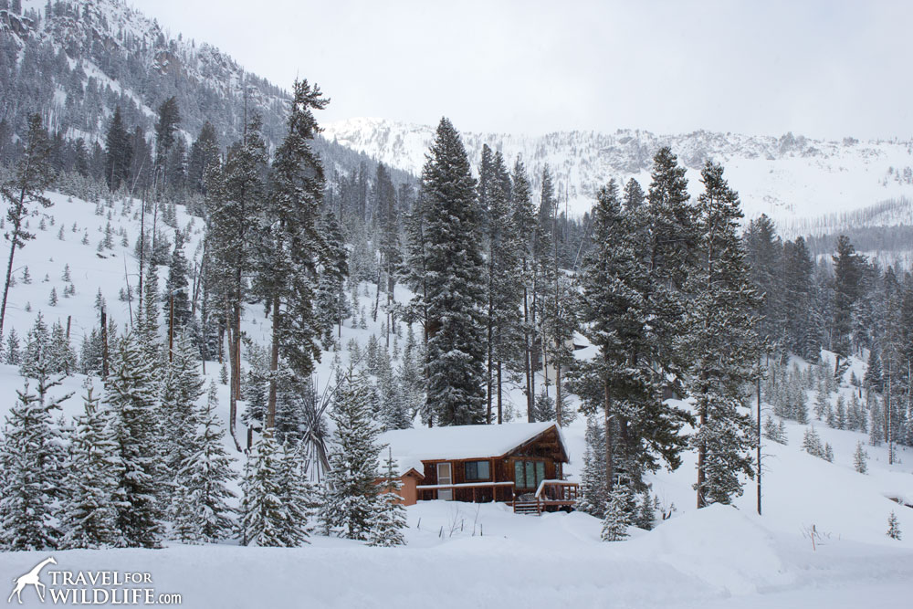 One of the cozy Yellowstone cabins