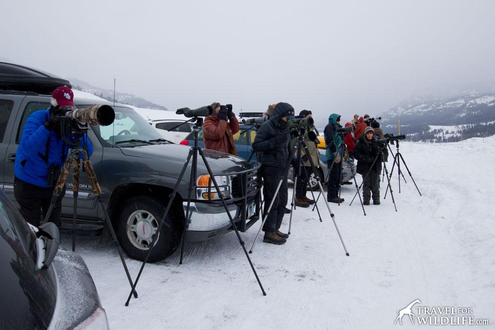 Wolf watching crowd on Lamar Valley, Yellowstone