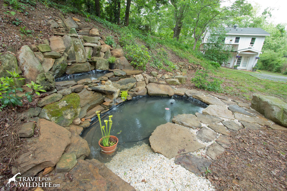 how to create a small pond