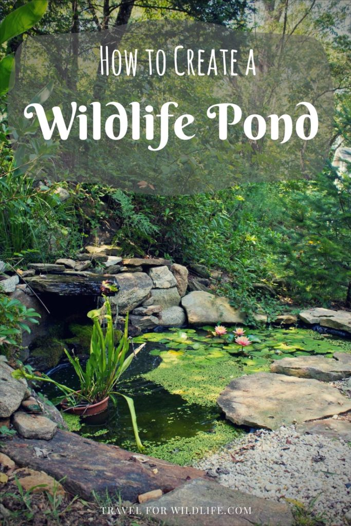 Creating a wildlife pond is easy! Follow our step by step guide and build your own wildlife pond. This pond will make your wildlife happy!