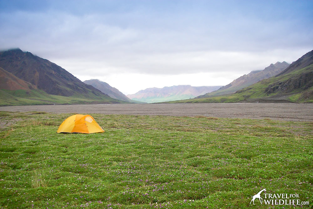 Backcountry camping in Denali
