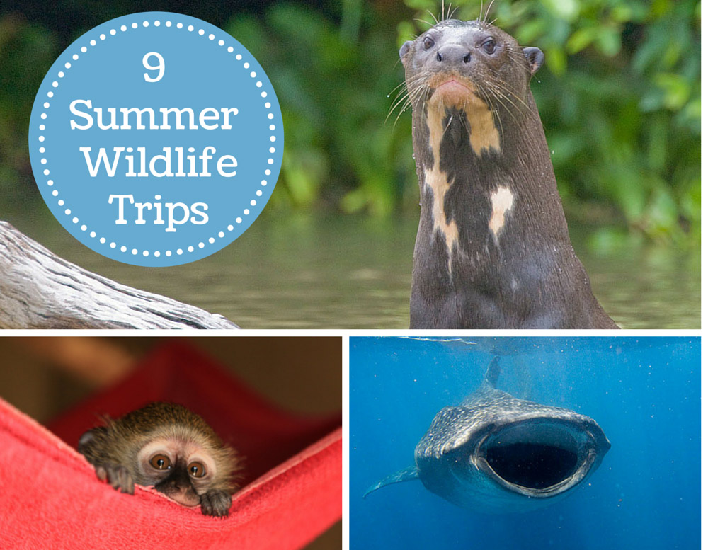 9 summer wildlife trips